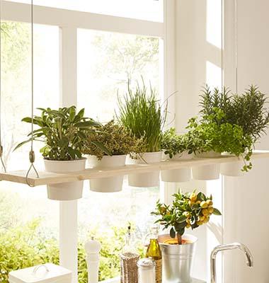 Estanter a para plantas arom ticas - Estanteria para plantas ...